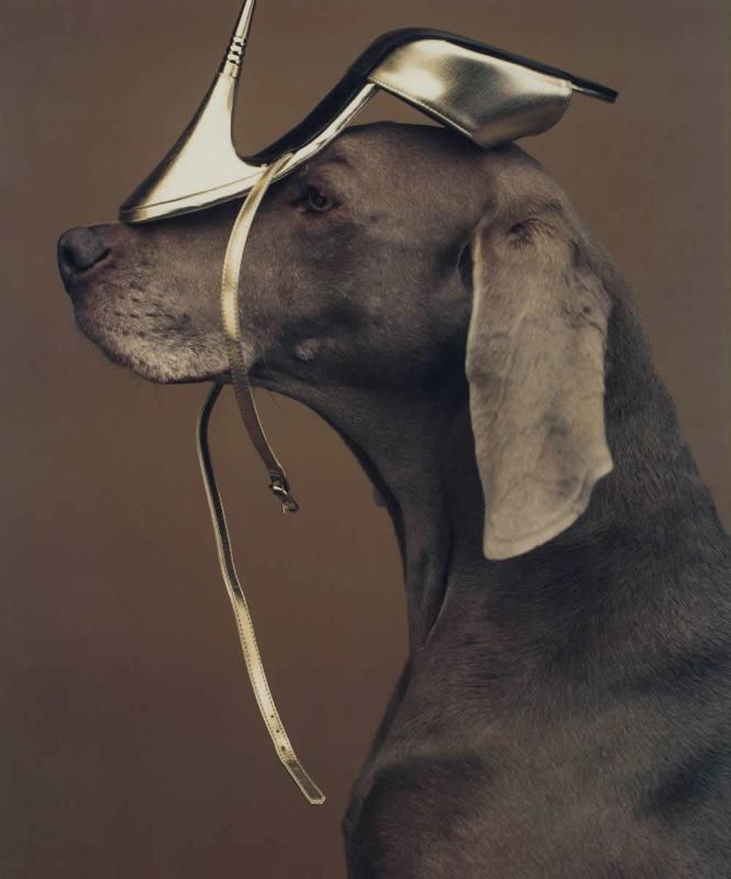 William Wegman, Shoe Head, 1994, Polaroid, 60 x 48 cm