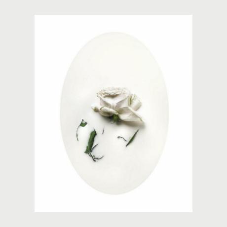 Nicola Vinci,Latte e polline,Photography